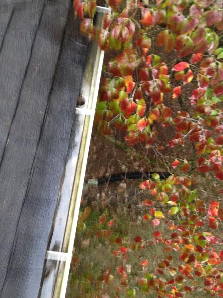 gutter-cleaning-lexington-ky