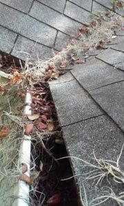 gutter-cleaning-orlando