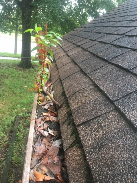 more dirty gutters