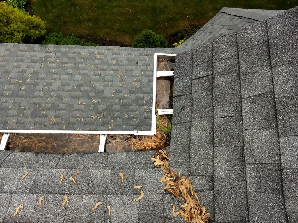Roof and Gutter Cleaning Near Me